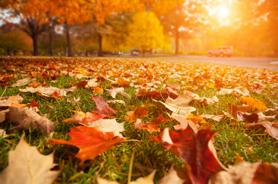 fall-leaves-sunset.png